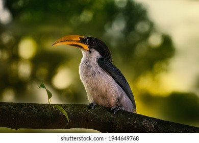 The Indian grey hornbill is a common hornbill found on the Indian subcontinent. It is mostly arboreal and is commonly sighted in pairs.