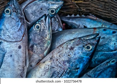 The Indian king fish in a auction at Cochi Port, Kerala, India