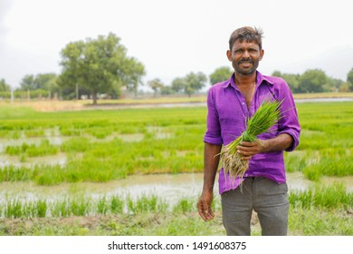 Indian labor holding rice field in farm