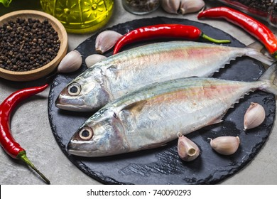 Indian mackerel Rastrelliger kanagurta