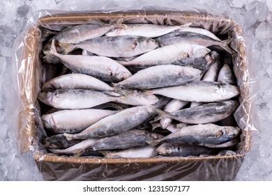 Fish Export Images, Stock Photos & Vectors | Shutterstock