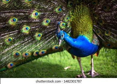 Dancing Bird Images, Stock Photos & Vectors | Shutterstock
