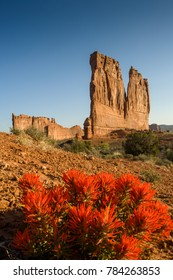 Indian Paintbrush near Courthouse Towers, Arches NP, Utah, USA