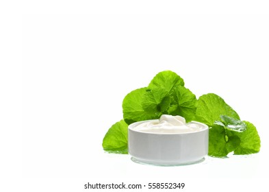 Indian pennywort (Centella asiatica (L.) Urban.) anti-aging skin care product.