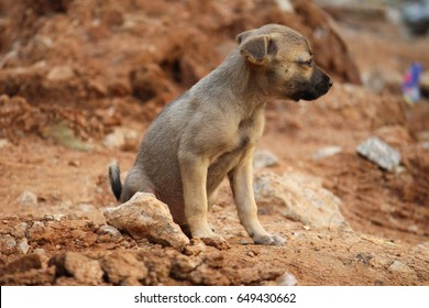 Indian puppy looking for food