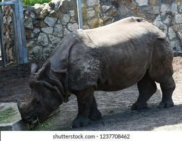 The Indian rhinoceros  also called the greater one-horned rhinoceros and great Indian rhinoceros, is a rhinoceros native to the Indian subcontinent.