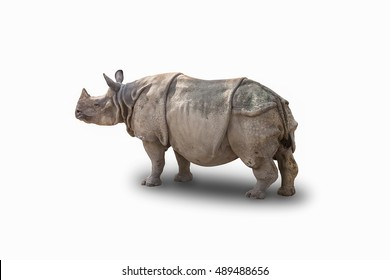 Indian Rhinoceros (Rhinoceros unicornis) on white background, with clipping path