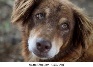 indian street dog