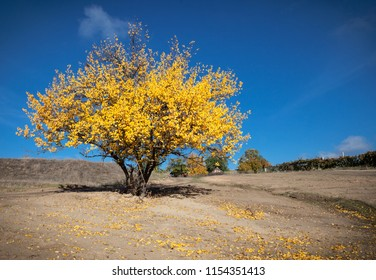 Indian summer landscape on a blue sky