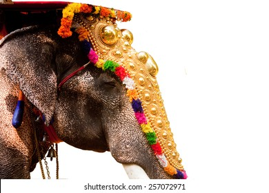 Temple Kerala Elephant Png : Choose from 2600+ kerala temple graphic resources and download in the form of png, eps, ai or psd.