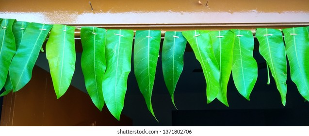 Indian traditional garland, toran or torana of mango leaves during festival season tied in front of the door