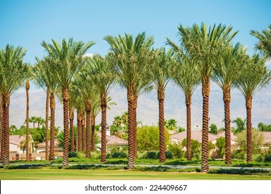 Indian Wells California USA. Residential Area and the Palm Trees.
