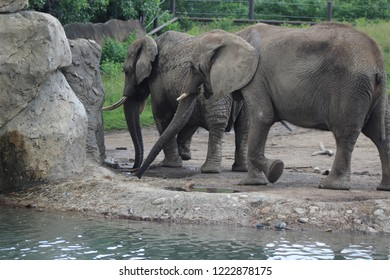 Indianapolis IN USA June 13 2014, Elephants and rocks and water