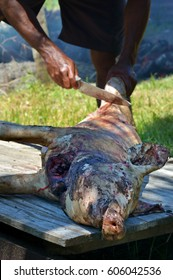 Indigenous Fijian man butchering a pork for holiday food.