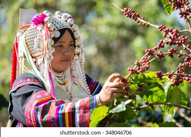 Indigenous peoples were picking coffee