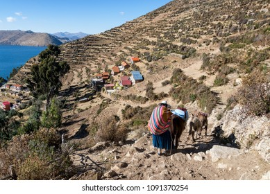 Indigenous woman with a pack and donkeys on the terraced hillside of Isla del Sol in Bolivia