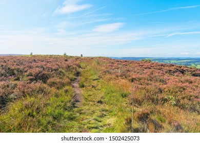 An indistinct footpath winds across the top of Birchen Edge through the heather.