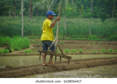 Indonesia 28 January 2020 : Farmer plowing fields in traditional way, cultivator plowing or plowing his land