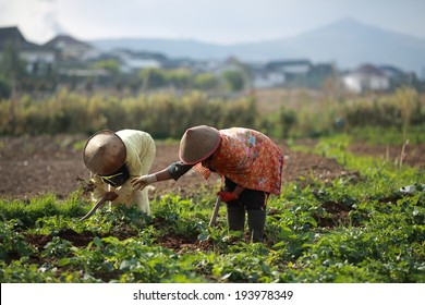 Indonesia farmer