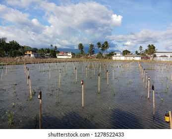 INDONESIA, GORONTALO - JUNE 11, 2018:Seen a few bottle lights and a cottage house who decorate rice fields