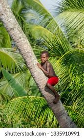 INDONESIA, IRIAN JAYA, ASMAT PROVINCE, AMANAMKAY VILLAGE - 13 JUNE 2016: Boy of the Asmat tribe climbed a palm tree. On June 13, 2016 Amanamkay Village, Asmat province, Indonesia