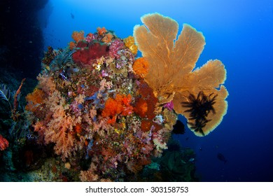 Indonesia reef scape with soft corals and sea fan