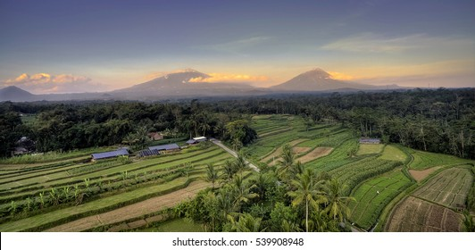 Indonesia Rice Field Aerial Photography and aerial view