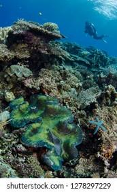 Indonesia, West Papua, Cenderawasih Bay. Diver above coral reef. Credit as: Jones & Shimlock / Jaynes Gallery / DanitaDelimont.com