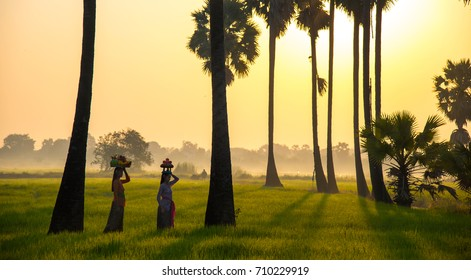 Indonesia women walk at rice field in the morning.
