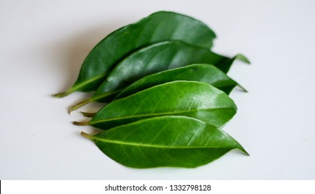 Indonesian bay leaf or Indian bay leaf on white background. The leaves of the plant are traditionally used as a food flavouring, and have been shown to kill the spores of Bacillus cereus