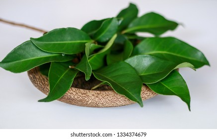 Indonesian bay leaf or Indian bay leaf on wood plate. The leaves of the plant are traditionally used as a food flavouring, and have been shown to kill the spores of Bacillus cereus.