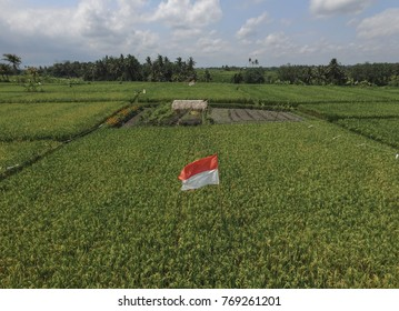 Indonesian Flag Merah Putih in the middle of rice field in Bali.