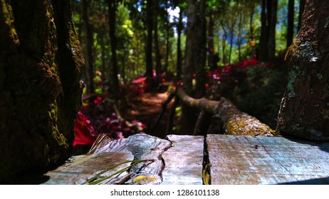Indonesian Florest Wood - Location: Geni Langit, Mojokerto, East Java