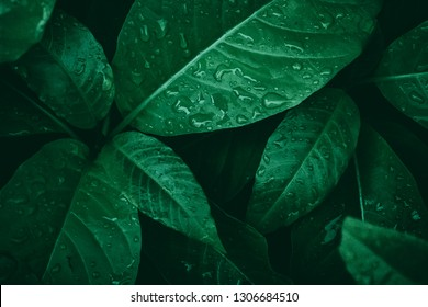 Indonesian forest leaves, edited with lightroom with dark brown style to make wallpaper