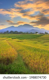 Indonesian landscape view with mountains and sunrise sky in the morning in a small village rice field