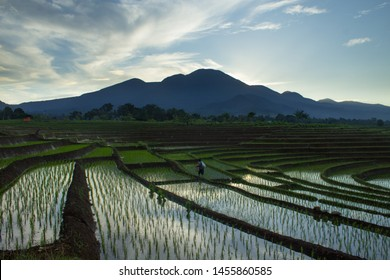 Indonesia's natural beauty of Sumatra, where green rice fields with high mountains and beautiful blue clouds for a relaxing trip