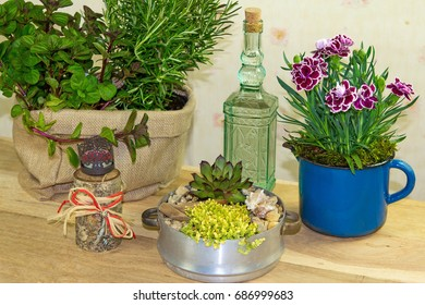 Indoor decoration with several flowers and herbs like rosemary and dianthus in old fashioned style.