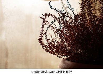 Indoor flower (heather) in a pot is standing at the window, it is raining outside.