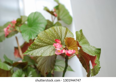 indoor flower on the loggia