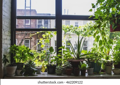 Indoor Garden in Brooklyn, NY