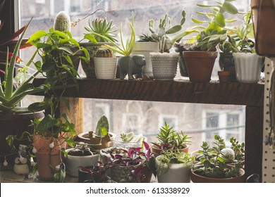 Indoor Garden in the Windowsill of an Apartment in Bushwick, Brooklyn