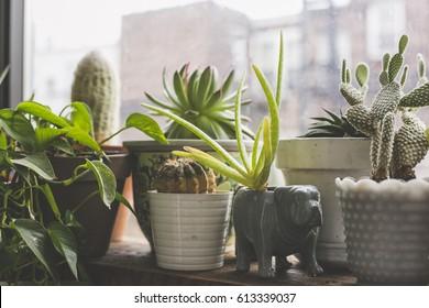 Indoor Garden in the Windowsill of an Apartment in Bushwick, Brooklyn