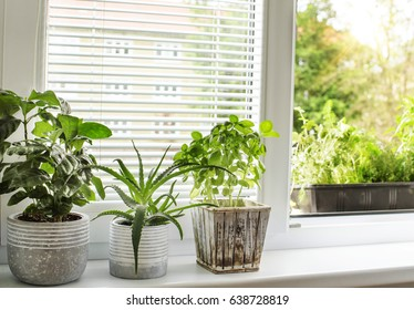 indoor green plants  window garden