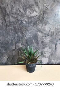 Indoor Natural,Green house zone on white woodden tabel and gray wall.