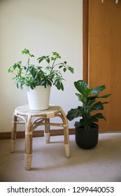 indoor plant ideas bedroom room interior decor home table fiddle leaf fig and umbrella plant leaf