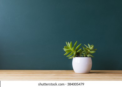Indoor plant on wooden table and wooden wall