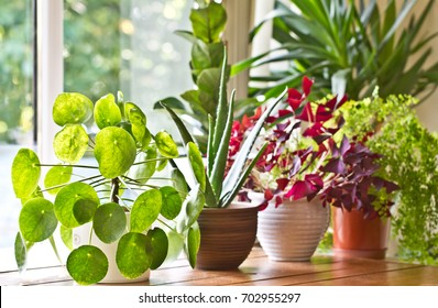 Indoor plants display. House plants