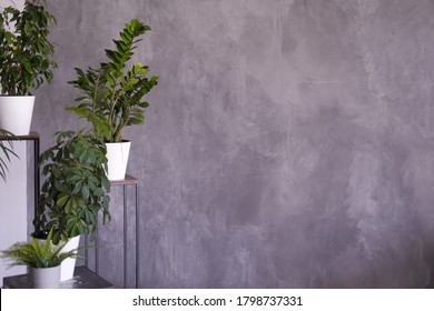 indoor plants on a stand on a dark gray background