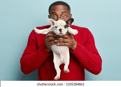 Indoor shot of dark skinned guy carries small funny puppy in front, covers face with dog, presents pet to girlfriend, likes animals, defends its rights, wears red jumper, stand over blue background