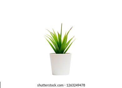 Indoor small green plant